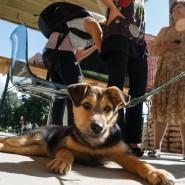 Онлайн выставка-пристройство приютских животных «Домой!» 2020 фотографии