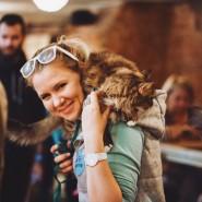 Выставка-пристройство животных из приюта «Юна-Фест» 2019 фотографии