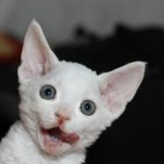 Международная выставка кошек «ИнфоКот 2015» фотографии