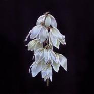 Выставка «Сказания и легенды. Удивительные растения» фотографии