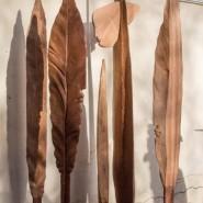 Выставка «Шепот травы» фотографии