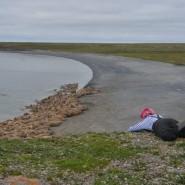 Выставка «Полярная экспедиция: шаг за шагом» фотографии