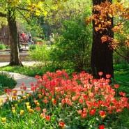 Ботанический сад МГУ «Аптекарский огород»  фотографии