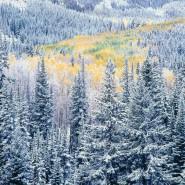 Выставка «Блистательный цвет Кристофера Беркетта: новые работы» фотографии