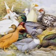Выставка «Птичник в усадьбе XIX — начала ХХ веков» фотографии