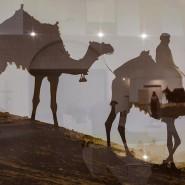 Выставка «Корабль пустыни» фотографии