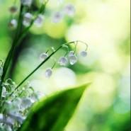 Выставка «Цветы. Грани прекрасного. Фотоработы Кидары Диаманты» фотографии