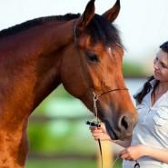 Бесплатные лекции о лошадях по выходным фотографии