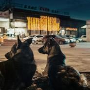 Фестиваль «Новое кино Австрии» 2020 фотографии