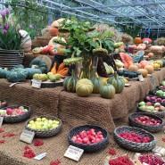 Фестиваль цветов, урожая и искусства «Краски осени» 2017 фотографии