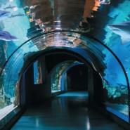Фестиваль «Подводная оранжерея» 2020 фотографии