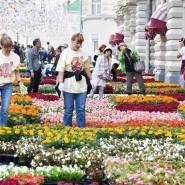 Фестиваль цветов в ГУМе 2019 фотографии