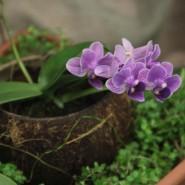 Выставка «Путешествие к орхидеям» фотографии