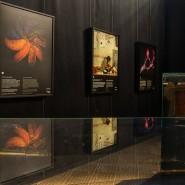 Выставка «Максимальное приближение» фотографии