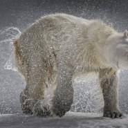 Выставка «Песнь холода» фотографии