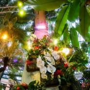 Фестиваль «Тропическая зима» фотографии