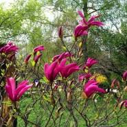 XV Весенний фестиваль цветов в «Аптекарском огороде» фотографии