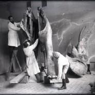 Выставка «25 фактов из жизни основателя музея» фотографии