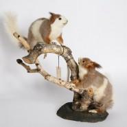 Выставка «Обыкновенные необыкновенные звери» фотографии
