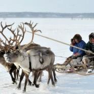 Выставка «Жизнь среди снега и льда» фотографии