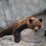 Ночь в Московском зоопарке фотографии