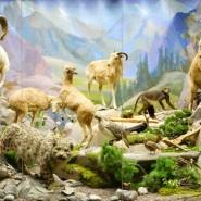 День рождения Дарвиновского музея 2018 фотографии
