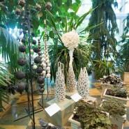 Выставка «Цветы и травы» фотографии