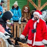 Активные экскурсии в питомник хаски «Северный» 2020 фотографии