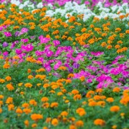 Фестиваль цветов в ГУМе 2018 фотографии