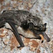 «Ночь летучих мышей» в зоопарке 2019 фотографии