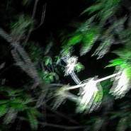 Выставка «Retina» фотографии