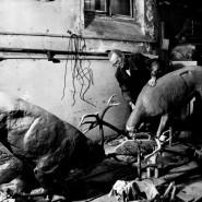 Выставка «МАСтер ТАКсидермии» фотографии