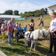 Экскурсии на ферму миниатюрных лошадок и мини-зоопарк фотографии