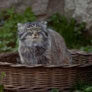 Международный день кошек в зоопарке 2017 фотографии