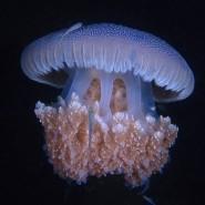 Фестиваль подводной фотографии «Дикий подводный мир» 2019 фотографии