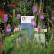 Праздник 85-летия Измайловского парка фотографии