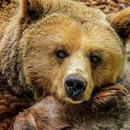 Выставка «Храп пещерного медведя» фотографии