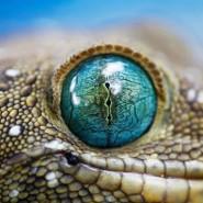 Выставка «Глаз: эволюция сложного органа» фотографии