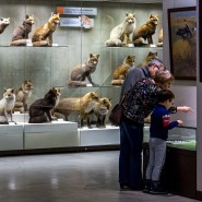 День старшего поколения в Дарвиновском музее 2020 фотографии