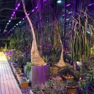 VII ежегодный фестиваль «Тропическая зима» фотографии