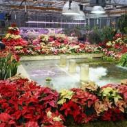 Выставка «Японский сад, Царство мхов и новогодние растения» фотографии