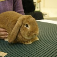 Выставка декоративных кроликов в Биологическом музее 2020 фотографии