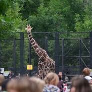 День города в Московском зоопарке 2017 фотографии