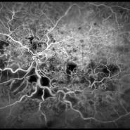 Выставка «Жизнь под микроскопом» фотографии