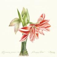 Выставка «Исчезающая красота. Растения «Красной книги» фотографии