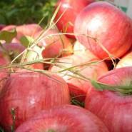 Фестиваль «Яблочный Спас» 2015 фотографии