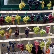 Выставка винограда в «Аптекарском огороде» 2017 фотографии