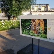 Выставка «Заповедный Дальний Восток» фотографии