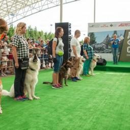 День фронтовой собаки в Музее Победы 2019