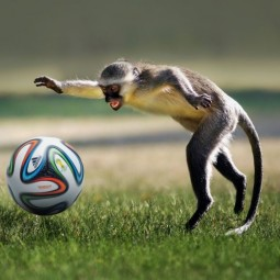 Выставка «Кто придумал футбол?»